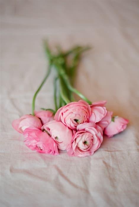 Francesilla flor para ramo de novia de invierno